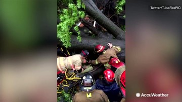Firefighters rescue man trapped under fallen tree
