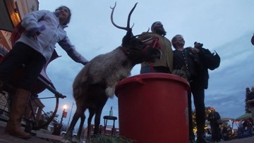 Reindeer comes from North Pole to visit the sweltering South