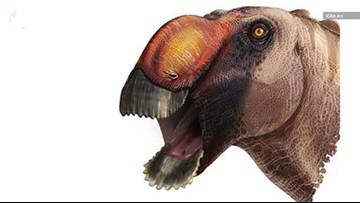 Bizarre Duck-Billed Dinosaur Discovered in Texas