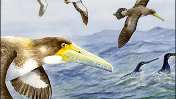 62-Million-Year-Old Bird with Serrated Beak Discovered