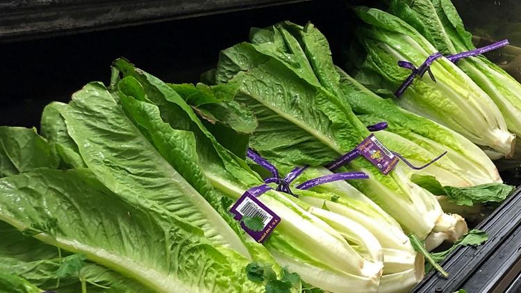 Romaine lettuce outbreak AP file