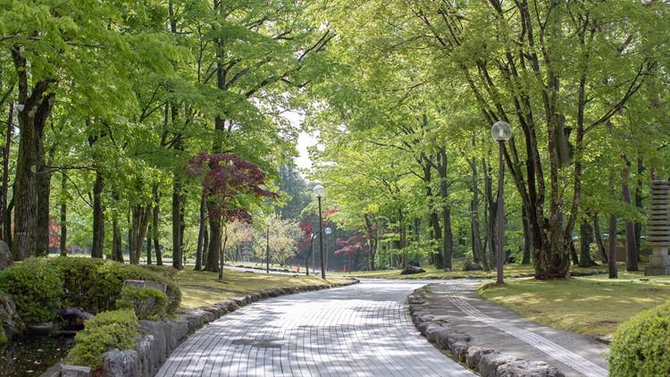City park garden