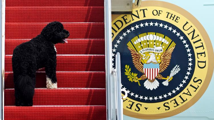 'He was exactly what we needed'   Obama's family dog Bo dies from cancer
