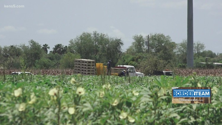 'It's very difficult' | Undocumented woman details her experience picking fruits, vegetables in the Rio Grande Valley