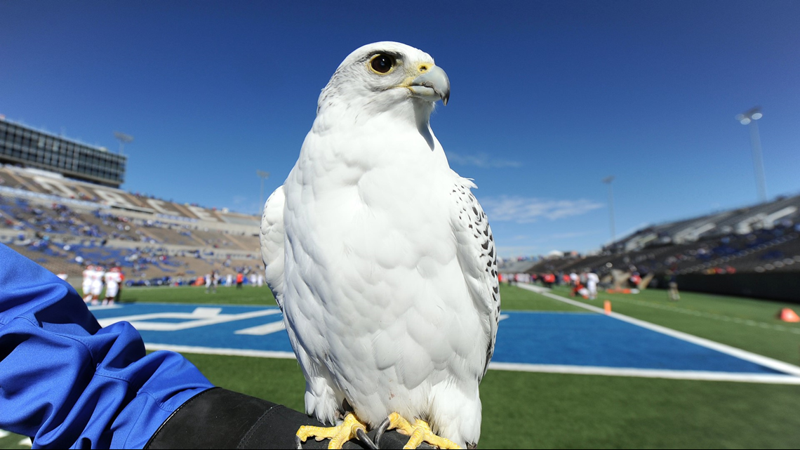 Air Force falcon mascot injured in West Point prank expected to make a full recovery