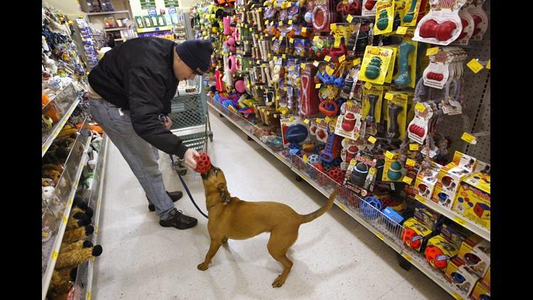 Family Claims Dog Was Mauled To Death At Pennsylvania Petsmart Grooming Salon Wfaa Com