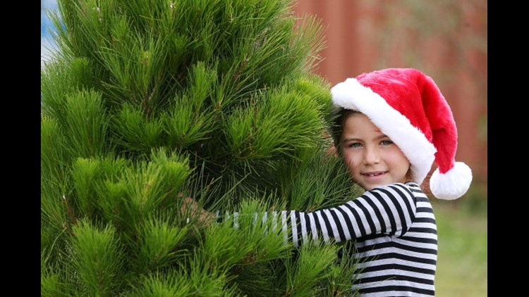 How to get rid of the possible 25,000 bugs on your Christmas tree
