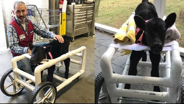 Lowe's employee in Monroe builds custom wheelchair for injured calf