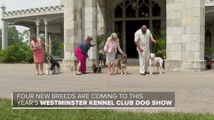 4 new breeds are joining the Westminster Kennel Club Dog Show in 2021