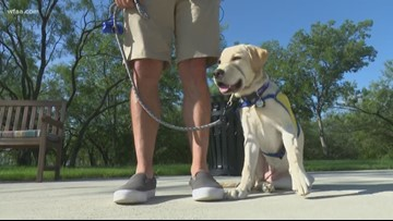 How to keep your pets safe during Fourth of July fireworks