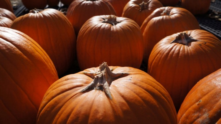List: Pumpkin patches, hayrides and other fall activities in North Texas