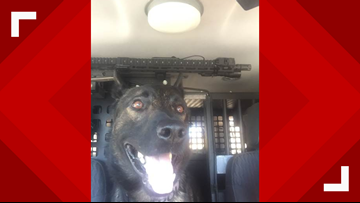 North Richland Hills K-9 back on duty after being shot in January