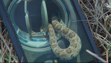 North Texas man finds rattlesnake in truck's air vent