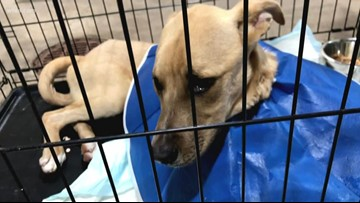Fort Worth shelter dog dies of parvo 48 hours after adoption, family says
