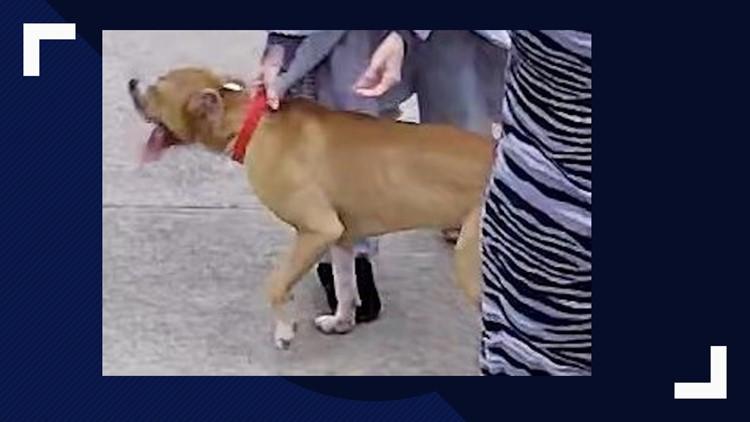 dog attack terrell