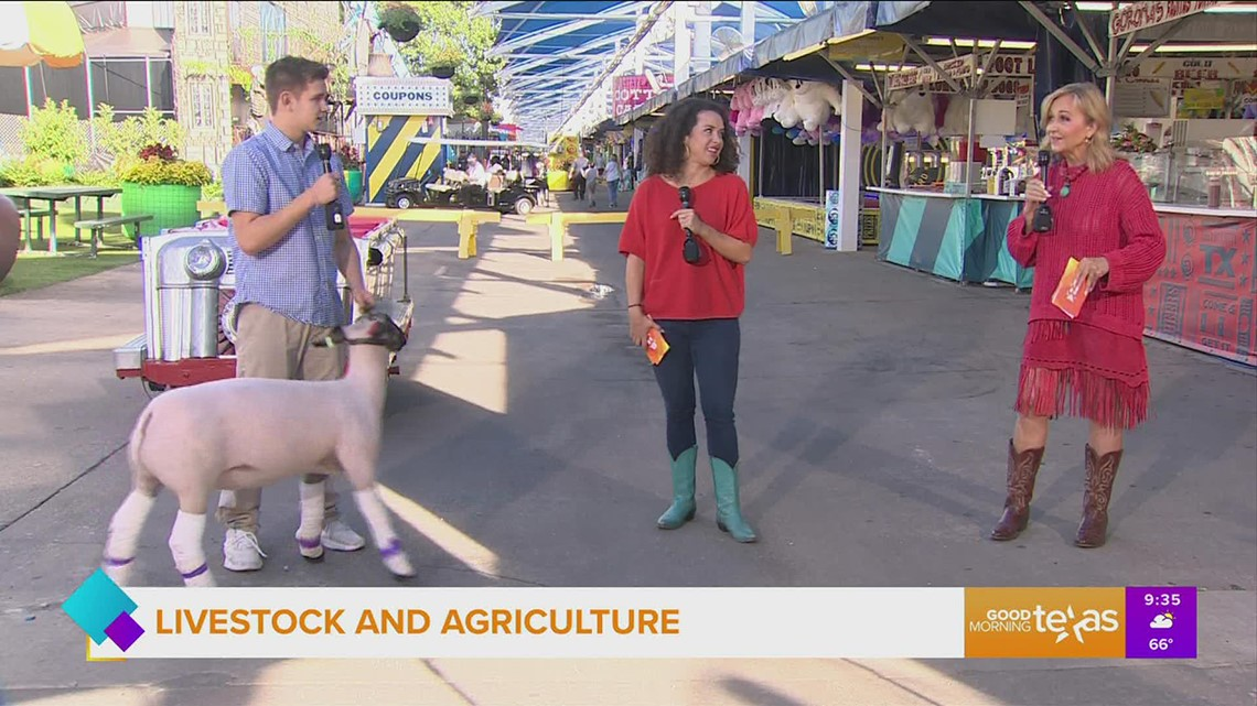 Livestock at State Fair of Texas