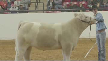 Expect warmth and rain for opening day of Fort Worth Stock Show and Rodeo