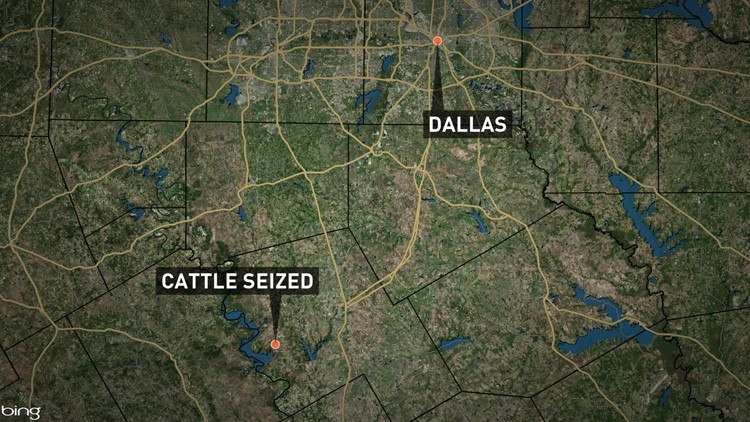 cattle_seized