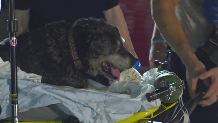 Arlington firefighters rescue a 15-year-old deaf dog from a storm drain