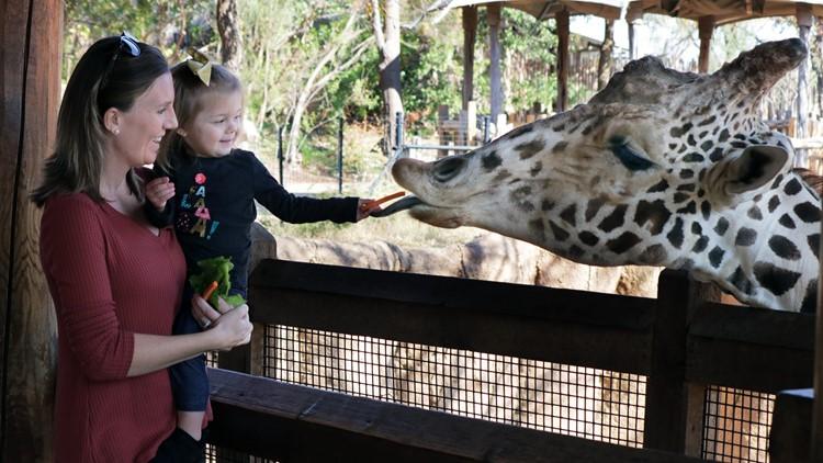 IMG9075-1920 x 1080 TV giraffe feeding platform1536869711238.jpg.jpg