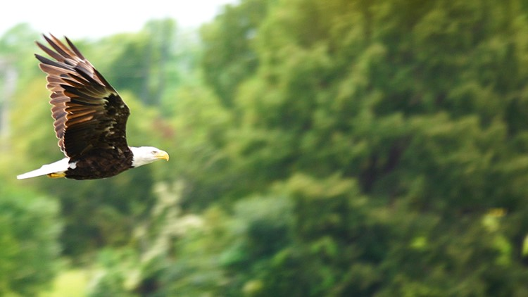 Eagle_1536888089815.jpg