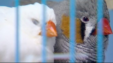 Cleburne pet store closed down, animals seized as court hearing looms