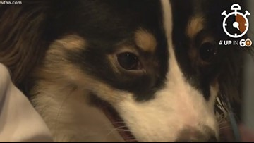 Dog-gone movie watching at one-of-a-kind Plano theater