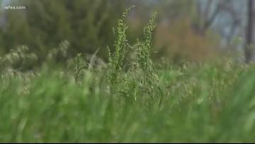 Wellness Wednesday: Powering through the high pollen days