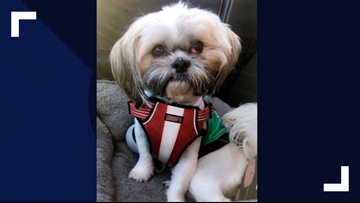 Good news: The dog stolen in a car in Plano has been found