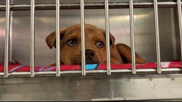 If you don't have a Valentine's Day date, take home an adoptable pet