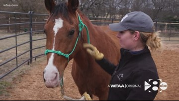 WFAA Originals: This ranch in McKinney is helping horses find homes