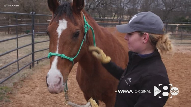 WFAA Original: It's not just dogs and cats. The SPCA of Texas also adopts out a record number of horses.