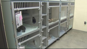 Teen sexually assaulted while volunteering at Fort Worth animal shelter, lawsuit says