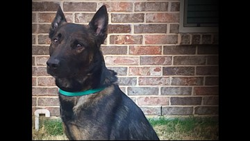 Injured North Richland Hills police K-9 Koba returns home