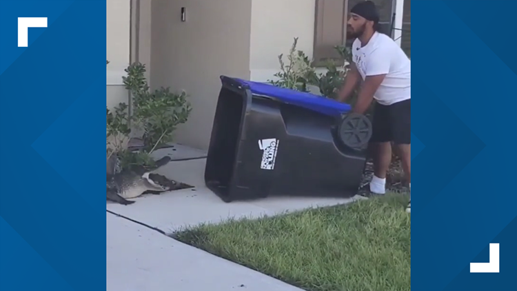 'I used the front like a hippo mouth': Florida man traps alligator with trash can