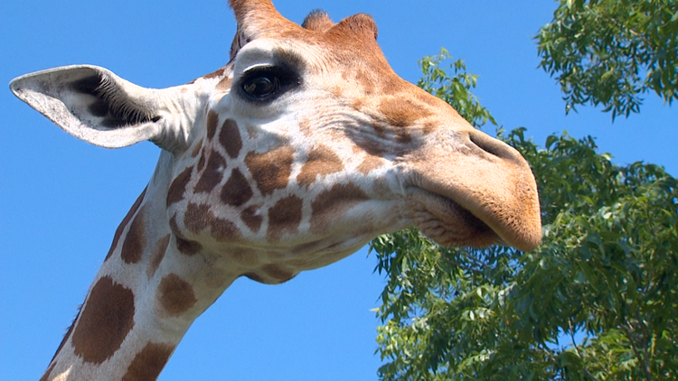 Summer fun: Safari adventures await just 90 minutes from Dallas