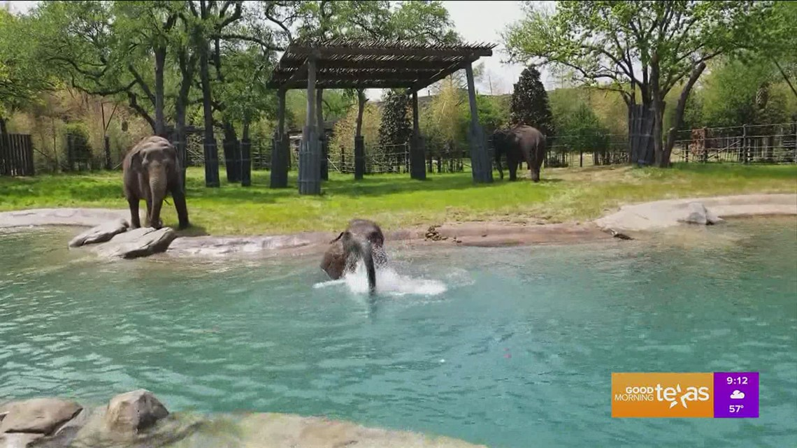 Elephant Springs, the Newest Attraction at the Fort Worth Zoo