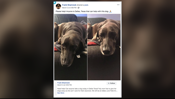 Ex-UFC champ accused of leaving dog at Love Field for 5 days: 'I'm an animal lover'