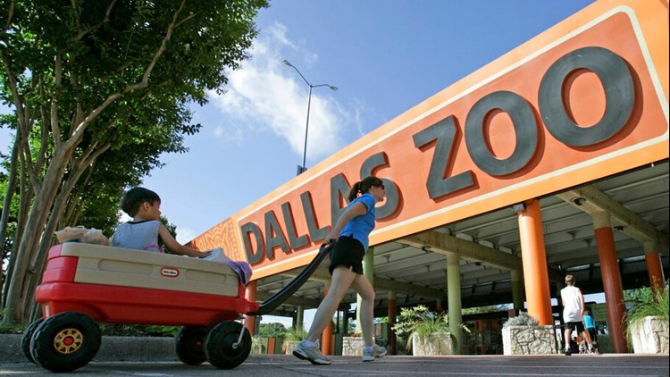Teens to get free access to Dallas museums, parks and other attractions during July