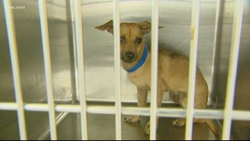 Fort Worth Animal Care & Control Center shelter is calling for adoptions and volunteers after power outage