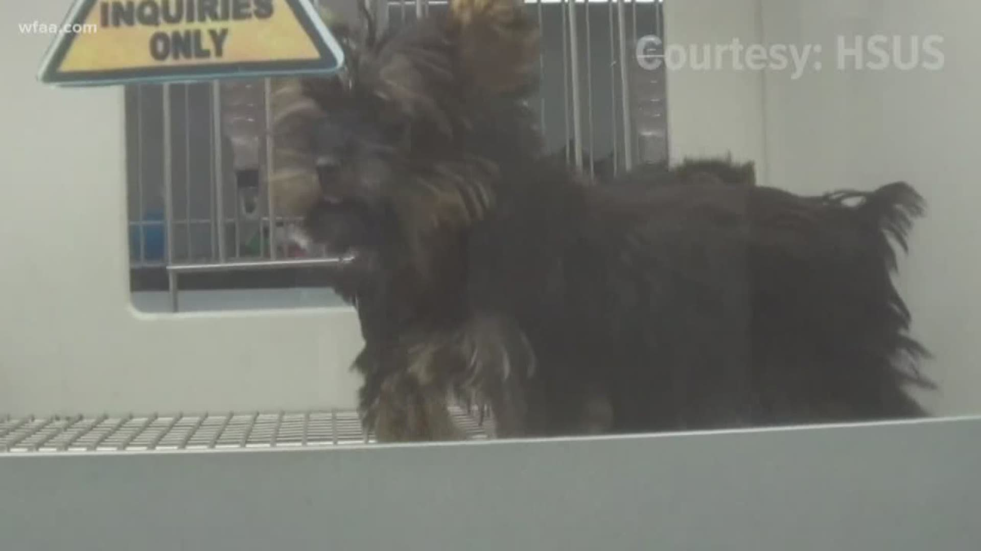Petland In Frisco Faces Scrutiny After Undercover Investigation By