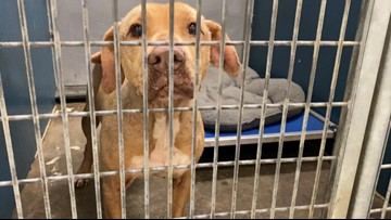 Fort Worth Animal Shelter reduces adoption price to $10