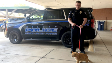 Police cats, Whataburger candles and dog-delivered pizza: A guide to Texas April Fools' Day jokes