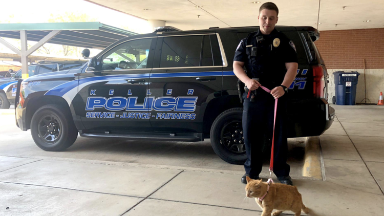 Police cats, Whataburger candles and dog-delivered pizza: A