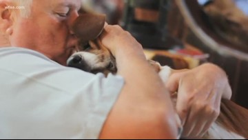 Dale Hansen Unplugged: A farewell to beloved Miss Hailey, 'never your typical dog'