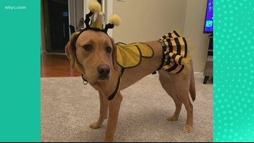 Want to dress your pet up for Halloween? Here are some great costume ideas!